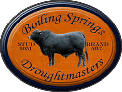 Boiling Springs Droughtmasters